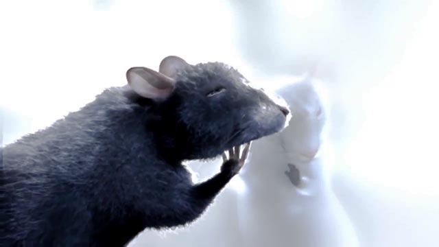 One-Rat-Short-SS_05-krk