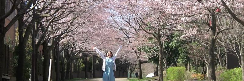 Sakura Toilet By Kentaro Akahane Japan Drama Short Film Viddsee