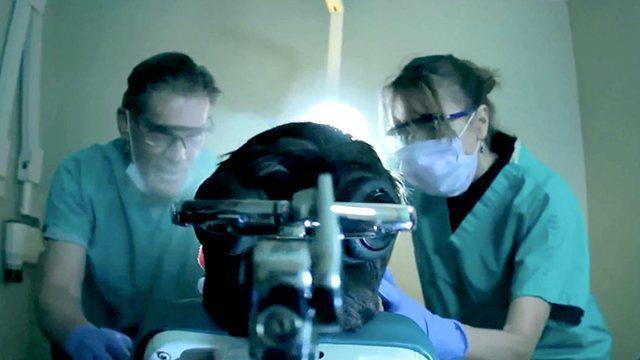 Pulling Teeth sw ss5 krk.jpg