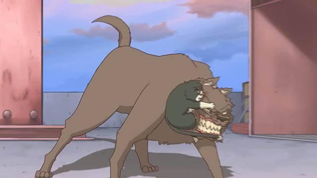 Cats Run ss7 krk.jpg